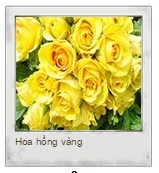 boi tinh yeu qua chon hoa hong