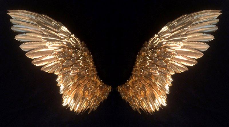 Mơ thấy đôi cánh điềm báo gì đánh số gì?