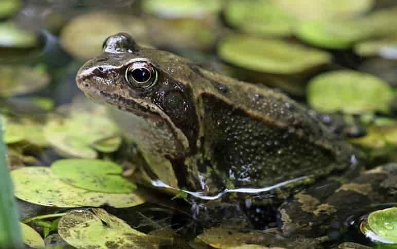 Mơ thấy con ếch điềm báo gì, đánh số nào thì trúng